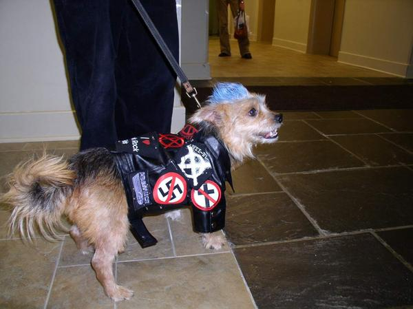 BUDDY-PUNK ROCK ATHEIST DOG