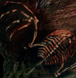 The Flying Trilobite's picture